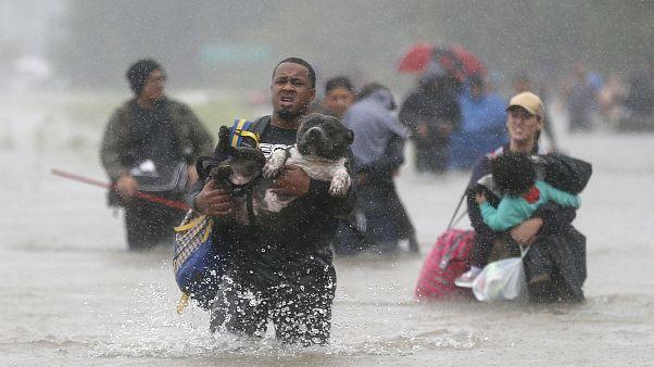 Plus de 8.000 personnes évacuées à Houston