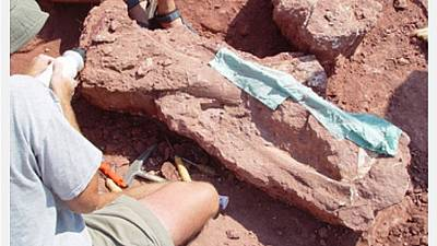 Discovered Tanzania dinosaur skeletons dates back 70 million years