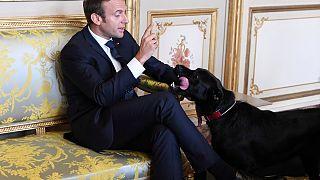 حضور سگ کاخ الیزه در دیدار ماکرون با گابریل