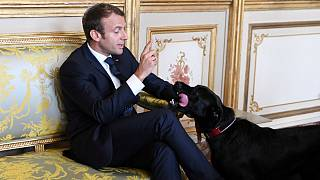 Meet France's new 'first dog' Nemo