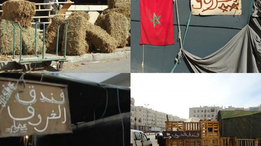 احجز لخروفك مكانا بفندق الكباش في المغرب