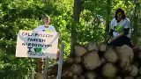 Dagad a botrány a lengyel erdő körül