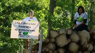 Polonia distrugge foresta millenaria