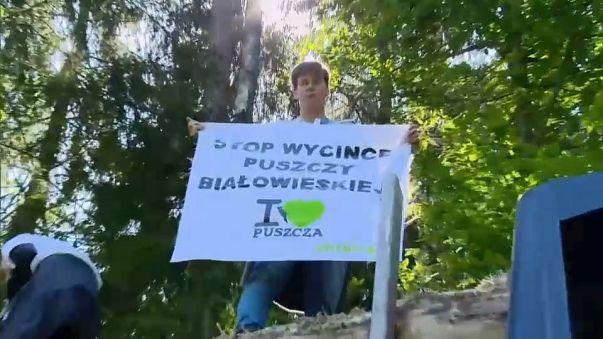 Polonia desafía a Europa con el bosque de Bialowieza