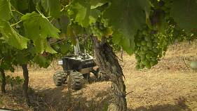 Vinbot, o robô de produção vinícola, em provas na região de Tomar