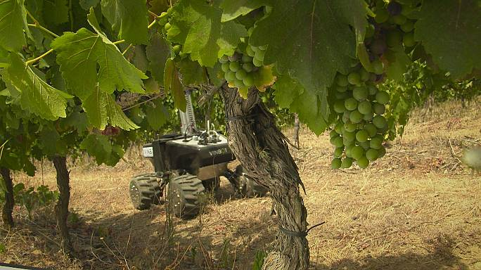 European winegrowers turn to robots to increase competitiveness