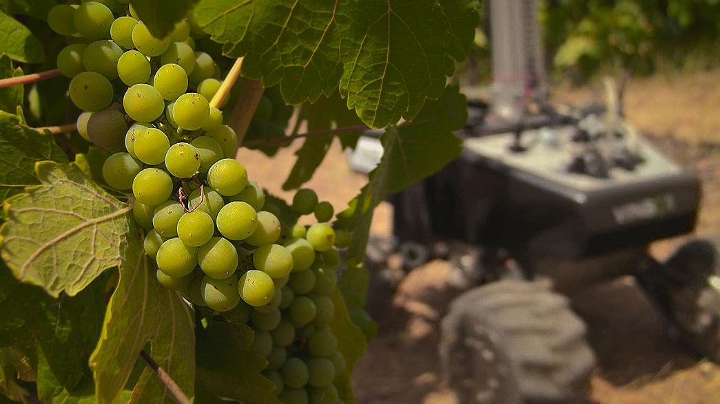 Takeaway: the wine robot