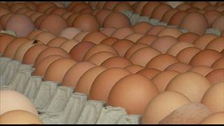 Italia: sequestro di uova contaminate da Fipronil