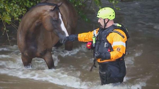 "Wirbelsturm ""Harvey"": Tiere in Texas aus den Fluten gerettet"