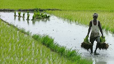 Africa urged to invest in agriculture
