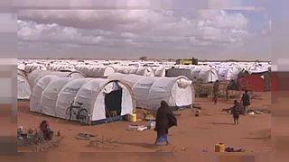 Nigeria : 11 déplacés tués dans le camp de Banki par Boko Haram
