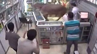ثور هائج يقتحم صيدلية مصرية