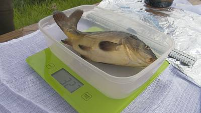 Fish in a new climate