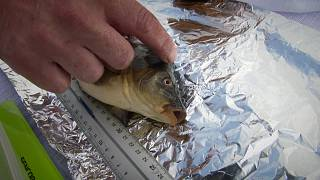 Takeaway: Fish & climate