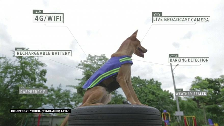 Meet the stray dogs using technology to keep the streets safe