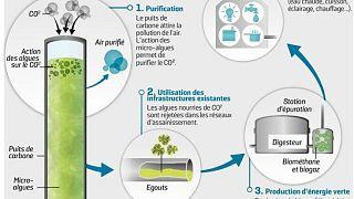 Microalgas para transformar a poluição em oxigénio