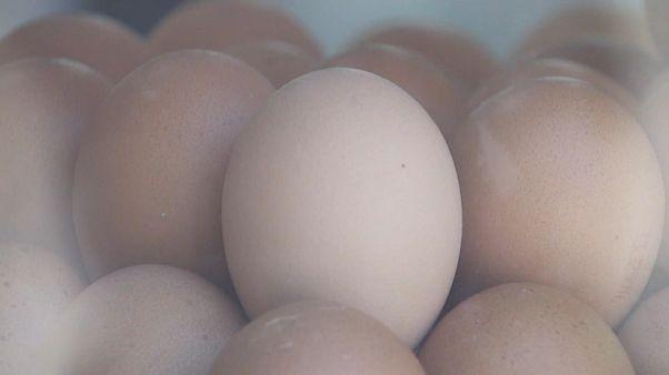 Bruxelas vai manter vigilância no caso dos ovos contaminados