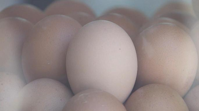 EU officials mull response to egg scandal