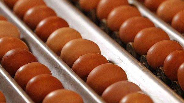 Ministério da Agricultura diz que não há ovos contaminados à venda em Portugal