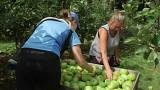 Shortage of eastern European labour in Britain