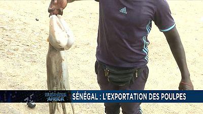 Les exportations de poulpe jouent un rôle clé dans l'économie sénégalaise, la Chine apporte un soutien à l'économie sud-africaine[Business Africa]