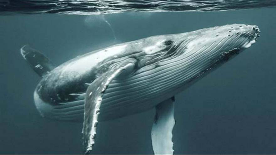 ارتباط خودکشی نهنگ ها با طوفان خورشیدی