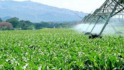 """Afrique : 280 millions de dollars pour lancer la """"révolution verte"""""""