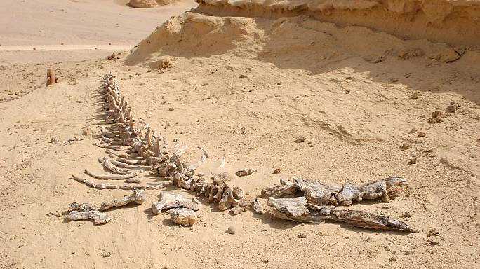 إيرلندي يعلن عن بيع قطعة من ديناصور هربت من المغرب
