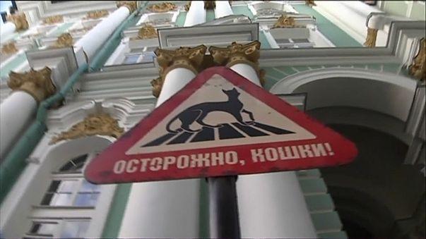 Russia: incendio all'Ermitage, quattro gatti intossicati