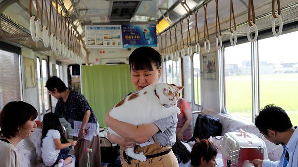 Un train pour défendre la cause des chats errants au Japon