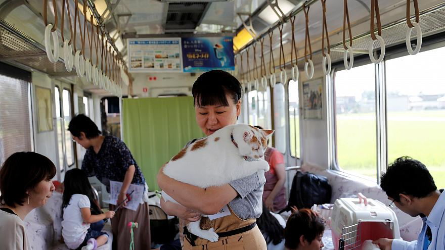 Japanese train operator invites cats on board to highlight plight of strays