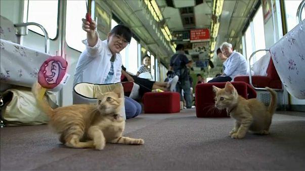 شاهد: من قط ضالٍ إلى قطٍ مدلل.. تجربة يابانية فريدة