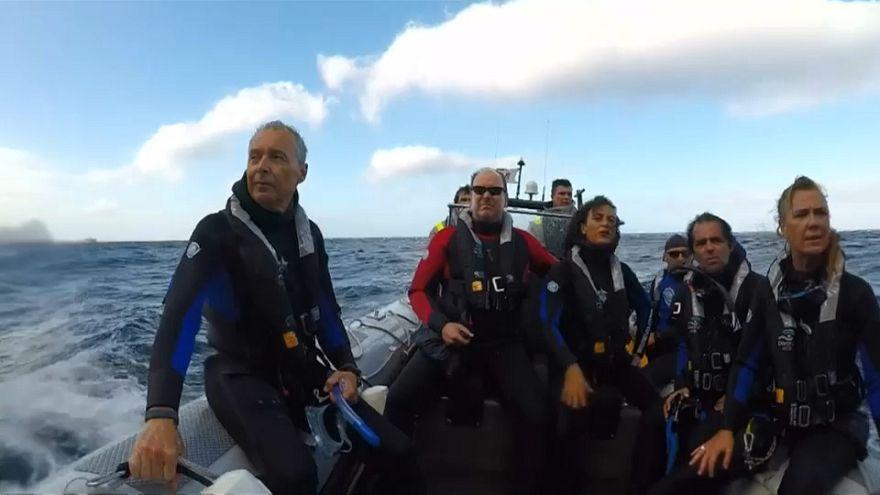 شاهد: أمير موناكو يعوم بين حيوانات الفقمة في البرتغال