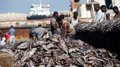 Illegal fishing by E.U. vessels, The Gambia, Eq. Guinea worse hit: Oceana report