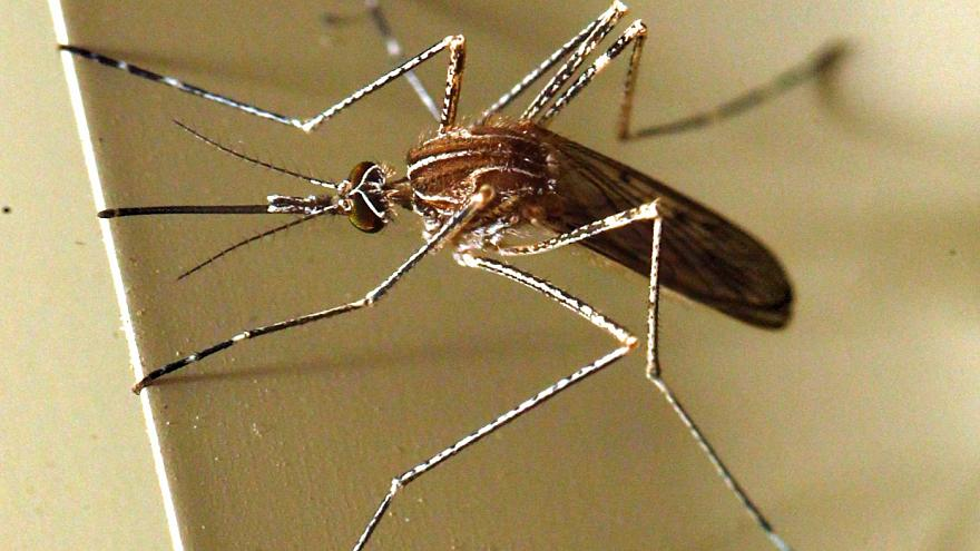 Romania screens transfusions after West Nile disease outbreak