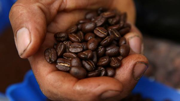 Caffé a rischio a causa del riscaldamento globale