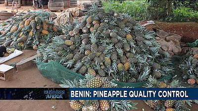 Pineapple production in Benin bounces back after suspension [Business Africa]