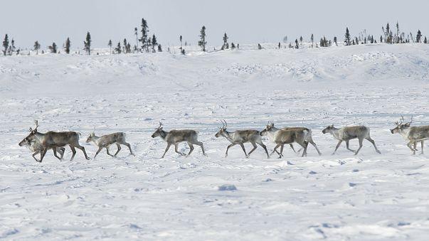 La biodiversité en danger au Canada