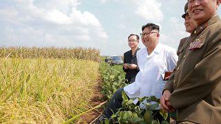 قطر والكويت توقفان تجديد تأشيرات عمال كوريا الشمالية