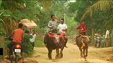 Festa dei morti in Cambogia, la spettacolare corsa dei bufali