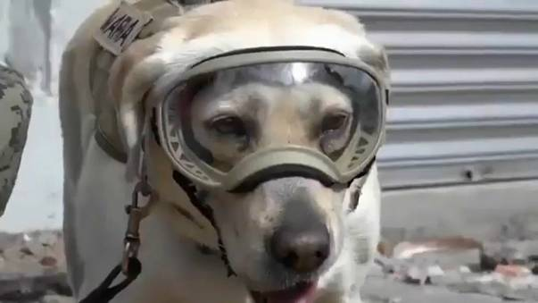 Пёс в сапогах спасает жизни