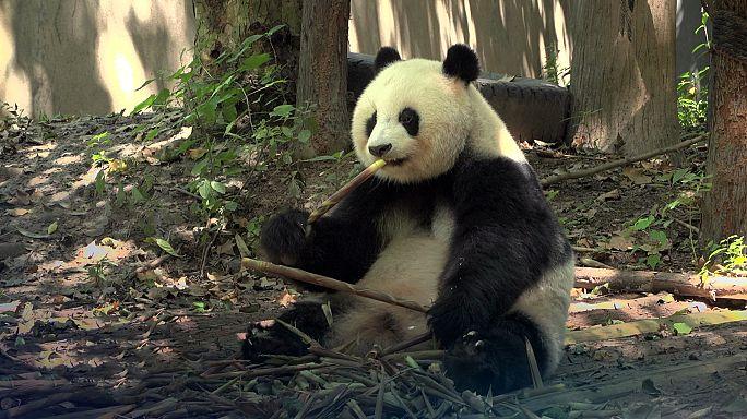 Pandával a szegénység ellen