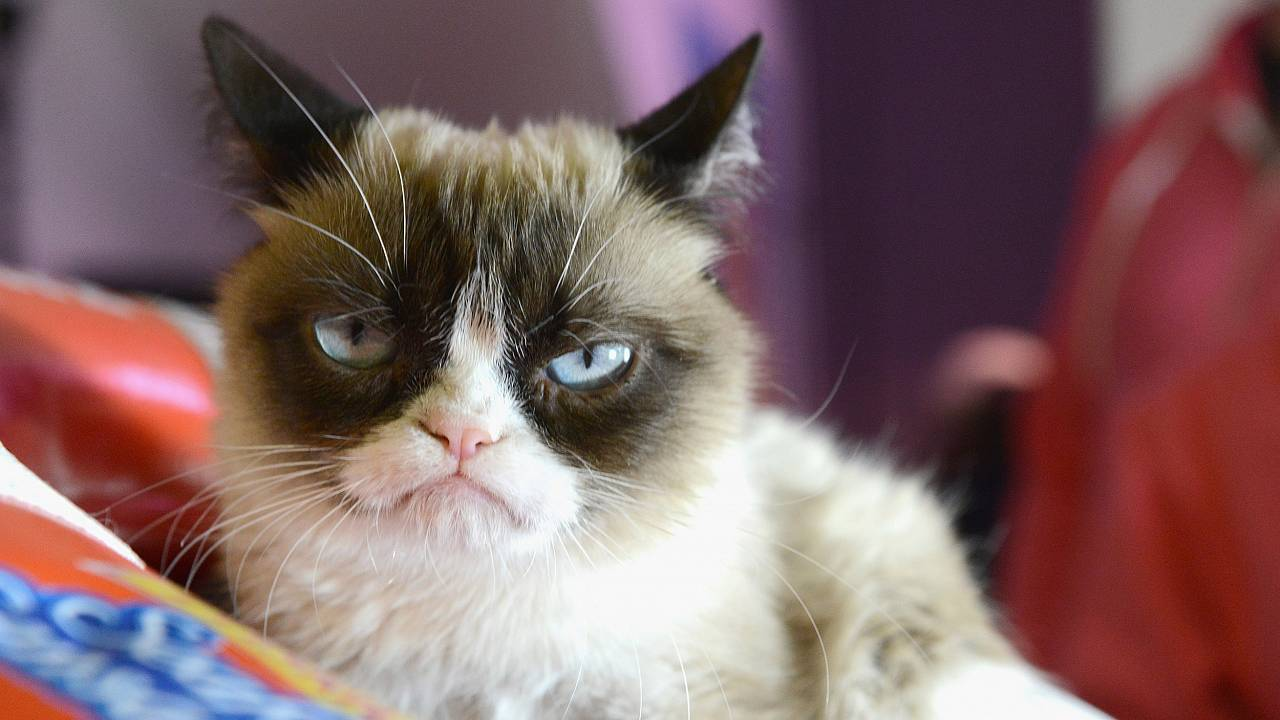 "Image: ""Grumpy Cat"" poses during the 2014 SXSW Music, Film   Interactive Fe"