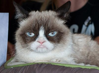 Grumpy Cat attends a book event in Ridgewood, New Jersey, in 2013.