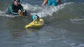 Des chiens surfent pour leur cause