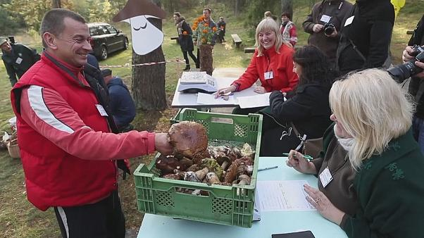 Litvanya'da mantar toplama yarışı
