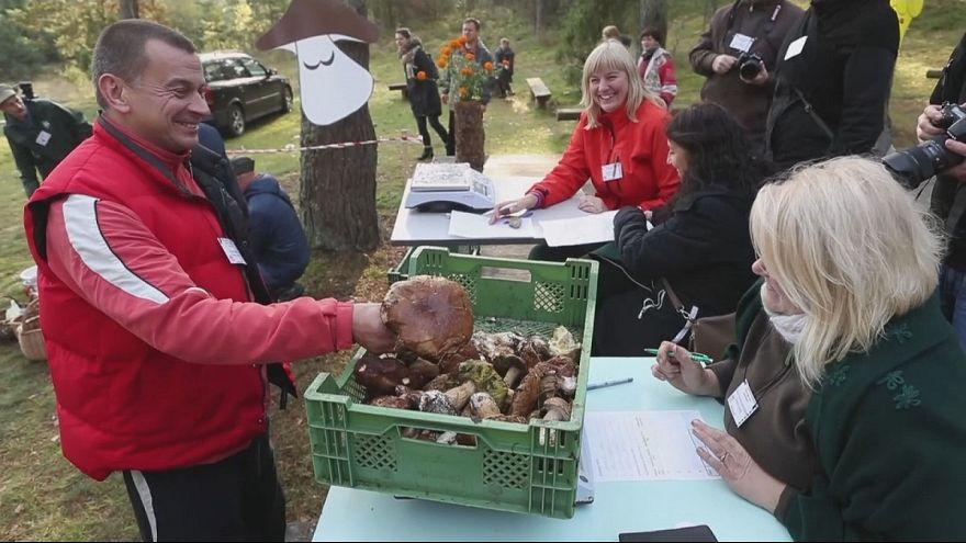 """Lituanos """"à caça"""" de cogumelos"""