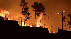 Portuguese children launch crowdfund bid after forest fires