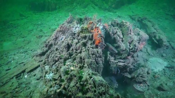 Реликтовый лес на дне морском