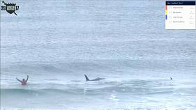 Killer whales give surfers a scare during Norway competition